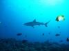 Wyprawa na Yap i Palau